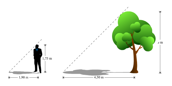 Mengukur Tinggi Pohon